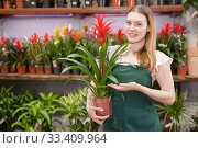Friendly female flower shop owner offering blooming potted plants for sale. Стоковое фото, фотограф Яков Филимонов / Фотобанк Лори