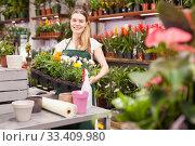 Female florist working in a flower store, making houseplants ready for the customer. Стоковое фото, фотограф Яков Филимонов / Фотобанк Лори