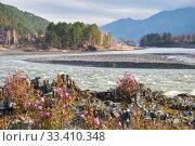 Купить «Rhododendron dauricum bushes with flowers (popular names bagulnik, maralnik) with altai river Katun on background.», фото № 33410348, снято 25 апреля 2019 г. (c) Serg Zastavkin / Фотобанк Лори