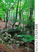 Купить «Dense forest in the Ravin d'Ajola mountains near Vizzavona, Corsica, France, Europe.», фото № 33424608, снято 13 октября 2019 г. (c) age Fotostock / Фотобанк Лори