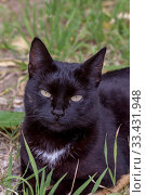 Купить «Portrait of a cat with green eyes close-up», фото № 33431948, снято 8 марта 2020 г. (c) Татьяна Ляпи / Фотобанк Лори