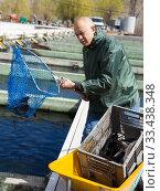 Купить «Male worker catching sturgeon with hoop net», фото № 33438348, снято 27 мая 2020 г. (c) Яков Филимонов / Фотобанк Лори