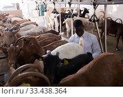 Купить «African american farmer milking a goats with an automatic milk machine», фото № 33438364, снято 15 декабря 2018 г. (c) Яков Филимонов / Фотобанк Лори