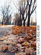 Купить «Walkway and fallen leaves.», фото № 33452408, снято 19 ноября 2019 г. (c) Елена Блохина / Фотобанк Лори