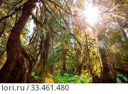 Купить «Rain forest with dense vegetation», фото № 33461480, снято 10 апреля 2020 г. (c) easy Fotostock / Фотобанк Лори