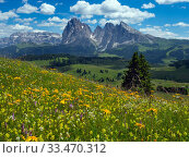 Alpine flower meadow landscape - Seiser Alm with mountains of Langkofel... Стоковое фото, фотограф Ernie  Janes / Nature Picture Library / Фотобанк Лори
