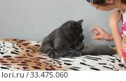 Купить «Темно серый пушистый кот кусает свою хозяйку которая его гладит», видеоролик № 33475060, снято 30 марта 2020 г. (c) Иванов Алексей / Фотобанк Лори