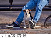Dog sits near man legs in park during coronavirus. Стоковое фото, фотограф Kira_Yan / Фотобанк Лори