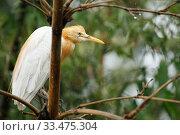 Купить «Wild herons are sitting on a tree in the forest», фото № 33475304, снято 1 марта 2020 г. (c) Евдокимов Максим / Фотобанк Лори
