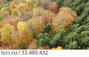 Купить «Aerial view of autumn forest. Colorful trees aerial view», видеоролик № 33480432, снято 19 октября 2019 г. (c) Яков Филимонов / Фотобанк Лори