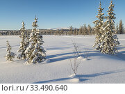 Winter landscape with clear blue sky and sunshine, snow on the trees, Gällivare county, Swedish Lapland, Sweden. Стоковое фото, фотограф Mats Lindberg / age Fotostock / Фотобанк Лори