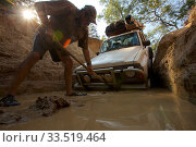Man working to dig out the Nissan stuck at the bottom of the drop into Palm Creek on the OTL, Cape York Peninsula, Queensland, Australia. Стоковое фото, фотограф Tim  Laman / Nature Picture Library / Фотобанк Лори