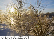 Купить «Bare deciduous trees covered with Ice and snow next to the Mille-Iles river in winter at sunrise, Ile St-Jean, Terrebonne, Lanaudiere, Quebec, Canada.», фото № 33522308, снято 28 января 2012 г. (c) age Fotostock / Фотобанк Лори