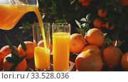 Купить «Fresh oranges and orange juice in glass outdoors on wooden table overlooking citrus grove», видеоролик № 33528036, снято 12 июля 2020 г. (c) Яков Филимонов / Фотобанк Лори