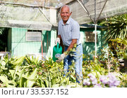 Купить «Older man watering plants», фото № 33537152, снято 13 июня 2018 г. (c) Яков Филимонов / Фотобанк Лори