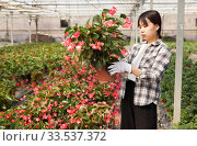 Cheerful chinese woman florist holding potted flowers begonia. Стоковое фото, фотограф Яков Филимонов / Фотобанк Лори