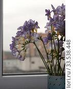 Купить «Букет фрезии в вазе на подоконнике на фоне окна», фото № 33538448, снято 6 марта 2020 г. (c) Наталья Николаева / Фотобанк Лори