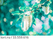 Купить «Poplar fluff on a tree branch against the blue sky.», фото № 33559616, снято 1 июня 2019 г. (c) Акиньшин Владимир / Фотобанк Лори
