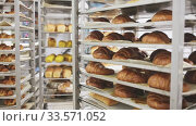 Купить «Freshly baked bread, loaves and rolls on tray rack trolley in bakery workshop», видеоролик № 33571052, снято 10 июля 2020 г. (c) Яков Филимонов / Фотобанк Лори