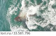 Vertical format footage wild marine mammal animal Northern Sea Lion swimming in cold water Pacific Ocean. Стоковое видео, видеограф А. А. Пирагис / Фотобанк Лори