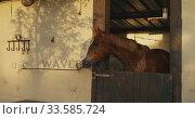 Dressage Horse waiting in a stable. Стоковое видео, агентство Wavebreak Media / Фотобанк Лори