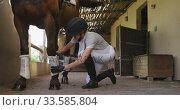Caucasian woman preparing the dressage horse. Стоковое видео, агентство Wavebreak Media / Фотобанк Лори