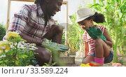 Купить «African american father and daughter gardening and giving a high five», видеоролик № 33589224, снято 14 января 2020 г. (c) Wavebreak Media / Фотобанк Лори