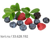 Купить «Blueberries, blackberry and raspberry with a sprigs with leaves on white background isolated», фото № 33628192, снято 26 июля 2016 г. (c) Наталья Волкова / Фотобанк Лори
