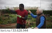 Купить «Gray haired elderly farmer scolding African American because of poorly done work in kitchen garden», видеоролик № 33628944, снято 12 февраля 2020 г. (c) Яков Филимонов / Фотобанк Лори