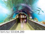 Купить «Подводный тоннель в океанариуме. Аквариум с тропическими рыбами», фото № 33634280, снято 21 декабря 2019 г. (c) Евгений Ткачёв / Фотобанк Лори