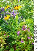 Купить «Декоративные цветы на клумбе в летнем саду», фото № 33635064, снято 15 июля 2019 г. (c) Елена Коромыслова / Фотобанк Лори
