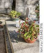 French humorist Sophie Daumier's tombstone, Père-Lachaise cemetery, Paris XXè, France. Стоковое фото, фотограф Alain Kubacsi / age Fotostock / Фотобанк Лори