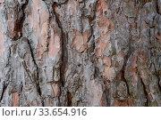 Купить «Close up macro photo of a tree bark log.», фото № 33654916, снято 13 июля 2020 г. (c) Pavel Biryukov / Фотобанк Лори