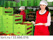 Cheerful woman working on producing sorting line at fruit warehouse, showing boxes full of ripe juicy peaches. Стоковое фото, фотограф Яков Филимонов / Фотобанк Лори