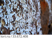 Blurred background of old wall with peel paint crack texture surface. Стоковое фото, фотограф Александр Сергеевич / Фотобанк Лори