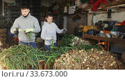 Купить «Couple of smallholder farmers peeling and sorting green onions. Harvest preparation for storage», видеоролик № 33673000, снято 29 мая 2020 г. (c) Яков Филимонов / Фотобанк Лори