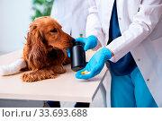 Купить «The vet doctor examining golden retriever dog in clinic», фото № 33693688, снято 14 июля 2020 г. (c) easy Fotostock / Фотобанк Лори