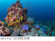 Купить «Maldives tropical reef community taking over dead or dying coral reef following several bleaching events, the latest in 2016. Mutafushi Thila, Baa Atoll, Maldives», фото № 33698548, снято 5 июля 2020 г. (c) Nature Picture Library / Фотобанк Лори