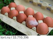 Frisch abgepackte Freilandeier mit Hühnerfeder an einem Ei. Стоковое фото, фотограф Zoonar.com/Alfred Hofer / easy Fotostock / Фотобанк Лори