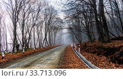 Road in the misty autumnal forest in Caucasus mountain. Стоковое фото, фотограф Zoonar.com/Anna Bogush / age Fotostock / Фотобанк Лори