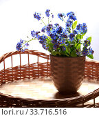 Купить «Bouquet of blue forget-me-not flowers on a wicker table on a white background», фото № 33716516, снято 5 мая 2020 г. (c) Яна Королёва / Фотобанк Лори
