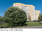 Купить «Яблоня на ветру в черте города. Санкт-Петербург», фото № 33736032, снято 18 июня 2019 г. (c) Румянцева Наталия / Фотобанк Лори