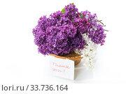 Купить «bouquet of beautiful blooming lilacs in a vase», фото № 33736164, снято 11 мая 2020 г. (c) Peredniankina / Фотобанк Лори