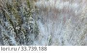 Купить «Winter forest in north, top view from flying drone at coniferous and deciduary forests. Karelia», видеоролик № 33739188, снято 20 января 2020 г. (c) Кекяляйнен Андрей / Фотобанк Лори