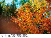 Купить «Yellow autumn leaves on the tree. Beauty sunny autumn day», фото № 33753352, снято 13 июля 2020 г. (c) easy Fotostock / Фотобанк Лори