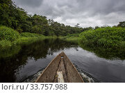 View from pirogue canoe, navigating the waterways of Bekalikali Bai, Salonga National Park Democratic Republic of Congo. May 2017. Стоковое фото, фотограф Karine Aigner / Nature Picture Library / Фотобанк Лори