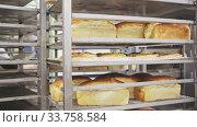 Купить «Appetizing fresh bread on rack in bakery», видеоролик № 33758584, снято 10 июля 2020 г. (c) Яков Филимонов / Фотобанк Лори