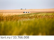 Купить «Prairie Scene Saskatchewan summer crop harvest Canada», фото № 33766008, снято 1 июня 2020 г. (c) age Fotostock / Фотобанк Лори