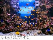 Тропические рыбки в морском аквариуме. Стоковое фото, фотограф Татьяна Белова / Фотобанк Лори