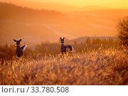 Купить «Cypress Hills Sunset Elkwater Alberta Horeshoe Canyon», фото № 33780508, снято 11 июля 2020 г. (c) age Fotostock / Фотобанк Лори